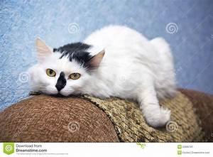 Cat, On, A, Sofa, Stock, Image, Image, Of, Lying, Mammals, Mammal