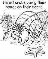 Coloring Pages Crab Printable Sheets Eric Carle Hermit 5th Grade Caleb Joshua Crabs Georgia Books Activities Bulldogs Colouring 2nd Animal sketch template