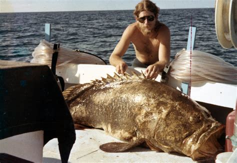 grouper goliath florida marquesas december don keys bear limits demaria officials tommy 1978 thomas taken collection grizzly say still harvesting