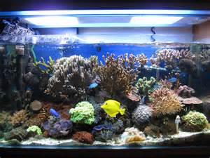 Acquario fjp v nano reef acquaportal forum