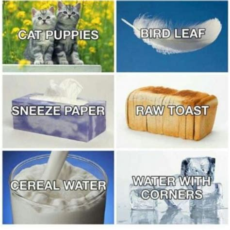 cat puppies bird leaf sneeze paper raw toast cereal water