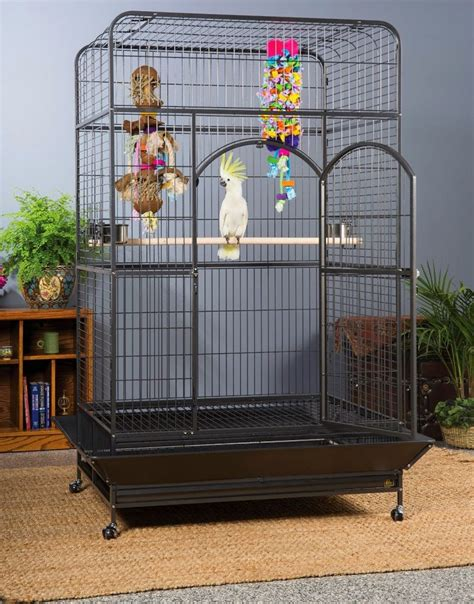 large bird cages extra large bird cage setup ideas spiffy pet products