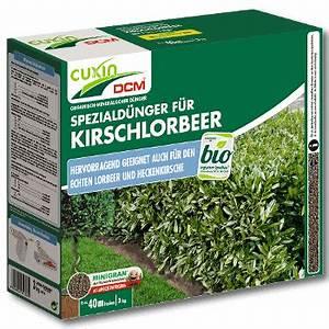 Dünger Für Kirschlorbeer : cuxin d nger f r kirschlorbeer ~ Lizthompson.info Haus und Dekorationen