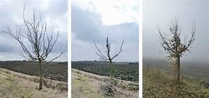 Wann Apfelbaum Pflanzen : apfelbaum schneiden anleitung anleitung apfelbaum selbst ~ Lizthompson.info Haus und Dekorationen
