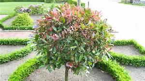 Winterharte Pflanzen Liste : weniger pflanzen ist mehr in quickborn handwerk ~ Michelbontemps.com Haus und Dekorationen