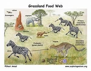 Elephants  Elephants Food Web