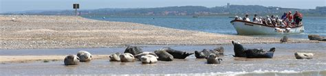 Beans Boats by Blakeney Seal Trips With Beans Boats April Timetable