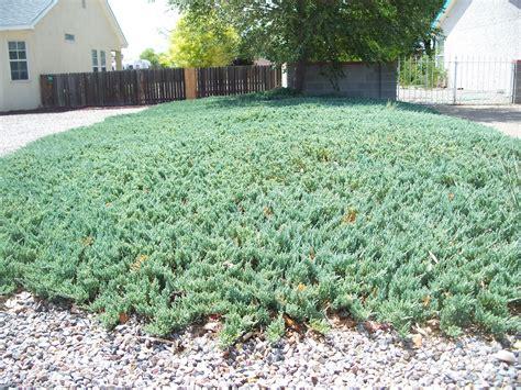 Trees That Please Nursery July 2012