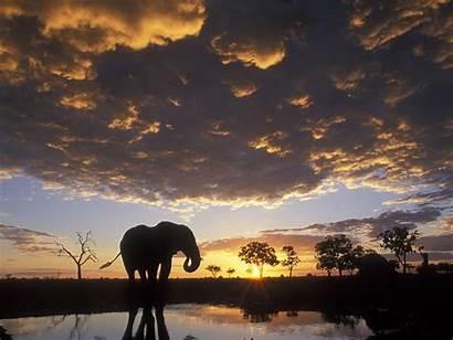 Africa Elephant African Wallpapers Pixelstalk Sunset Animals