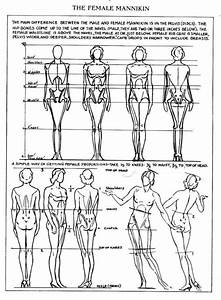 Female Anatomy Drawing Reference Guide