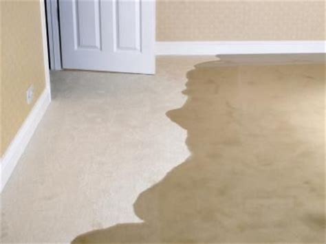 How To Remove Smell From Basement by Cleaning Or Drying Wet Carpet Fct Surface Cleaning