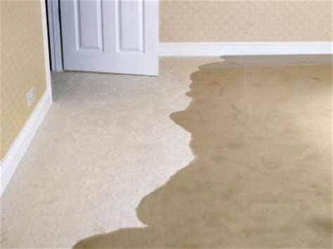Cleaning or drying wet carpet   FCT Surface Cleaning