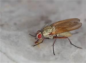 Was Tun Gegen Mücken Im Zimmer : insekten m cken fruchtfliegen co ~ Lizthompson.info Haus und Dekorationen