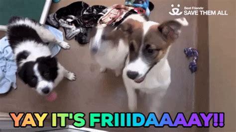 Funny Dog Happy Birthday Wishes