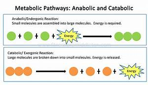 Anabolic And Catabolic Pathway Of Electron Transport In The Diagram
