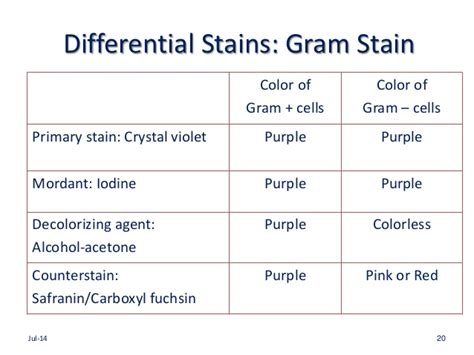 gram negative stain color gram stain colors difference between gram positive and