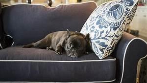 pancreatitis dogs symptoms causes treatments