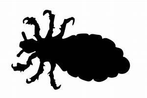 Wie Sehen Kakerlaken Aus : das aussehen der kopfl use kopfl use bestimmen und erkennen ~ Watch28wear.com Haus und Dekorationen