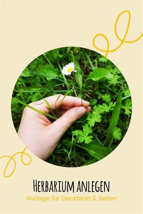 Klasse am gymnasium und wie erstelle ich aus den vorlagen ein herbarium? Herbarium anlegen: Anleitung + kostenlose Vorlage fürs Deckblatt - Talu.de Video Video in ...