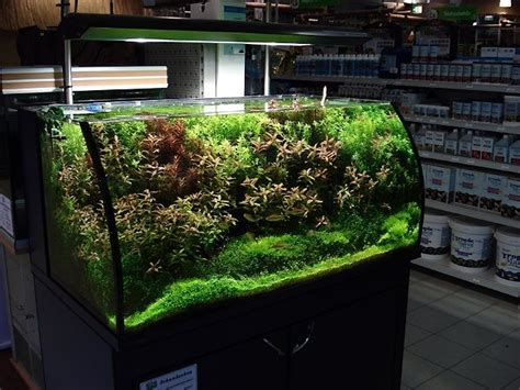 Oliver Knott Aquascaping by Hraquascape Org članci With Oliver Knott