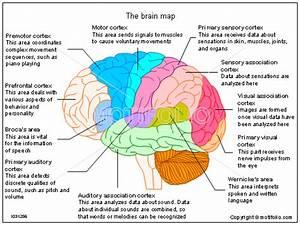 The Brain Map Illustrations