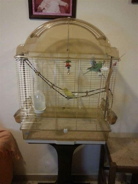 gabbia per cocorite dimensioni nuova gabbia cocorite e pappagallini ondulati