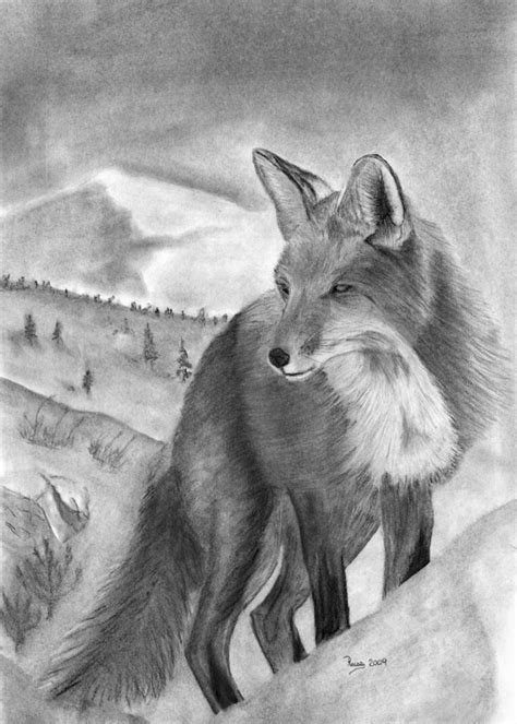 sketches  animals charcoal drawing   red fox