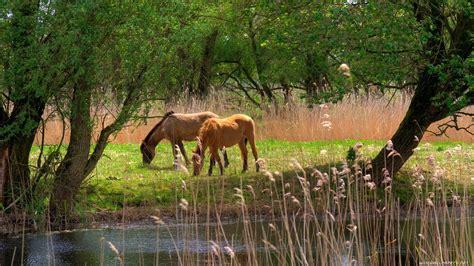 descargar 1920x1080 paisajes animales caballos hierba