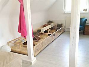 Meerschweinchen Gehege Ikea : haltung in der wohnung meerschweinchen ~ Orissabook.com Haus und Dekorationen