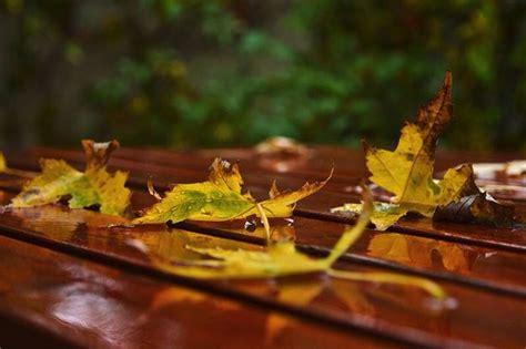 Autumn leaves. | Autumn leaves, Herbs, Leaves