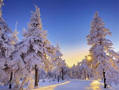 Winter Germany Snow Nature Wonderland Saxony Desktop