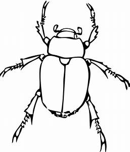 bug line drawing | Line Drawings & Printables | Pinterest