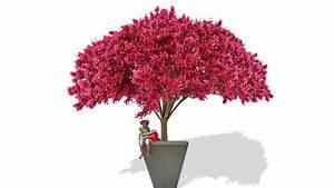 Arbuste Fleuri En Pot : les pots de jardin xxl envahissent le jardin ~ Premium-room.com Idées de Décoration