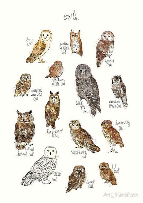 ideas  drawings  owls  pinterest owl