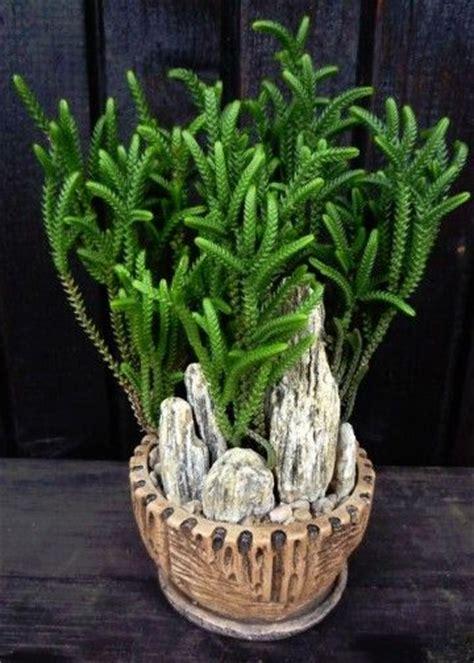 plantas ornamentales de interior  exterior plantas