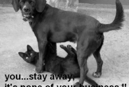 Funny Black Cats and Dogs