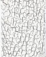 Bark Tree Drawing Dripps Getdrawings sketch template