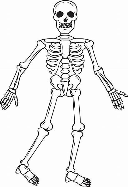 Skeleton Coloring Printable Halloween