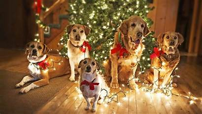 Dog Christmas Wallpaperaccess Wallpapers Holidays Dogs Tree