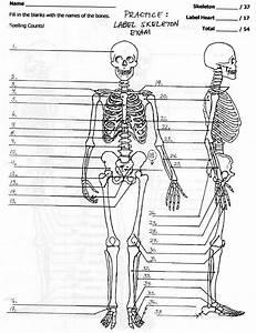 31 Blank Skeleton To Label