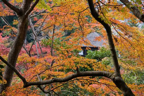 The top 6 trees for autumn colour - The English Garden