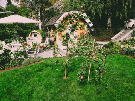 Augļu koku un krūmu veidošanas specifika - Gartens.lv