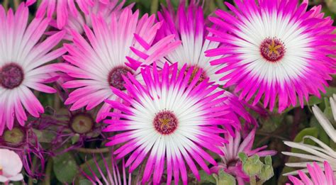 Images Of Pink Flowers Free Stock Photo Domain Pictures