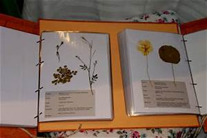 Was Ist Ein Herbarium : little old cottage zertifizierter kr uterp dagoge bne die pr fung specialist for wild herbs ~ A.2002-acura-tl-radio.info Haus und Dekorationen