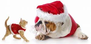 Holiday Pet Visits? 10 Tips For Happy Vacations with Pets
