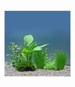 Aquarium Deko Set : planet plants 30er set deko t pfe aquarium pflanzen dehner ~ Frokenaadalensverden.com Haus und Dekorationen