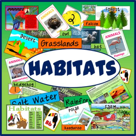 Now that we understood the definition of a habitat, we needed to choose some different animals to learn about that lived in those habitats. HABITATS ANIMALS SCIENCE RESOURCES DISPLAY EARLY YEARS KS1 ...