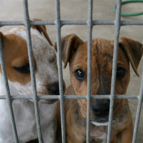 5 ways to help your local animal shelter