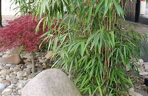 Bambus Als Sichtschutz Im Kübel : immergr ner bambus als sichtschutz g rtnerei unflath ~ Frokenaadalensverden.com Haus und Dekorationen