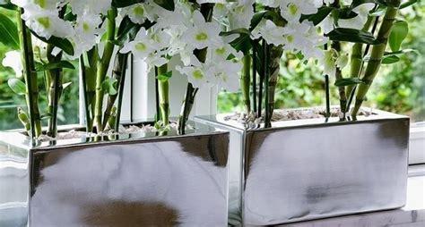 piante da appartamento con fiori piante da interno grandi uy33 187 regardsdefemmes